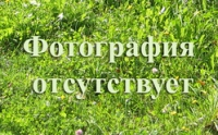 Декоративный спил-пенек D120/20